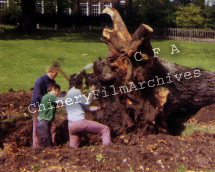 TREE GANG PR 10