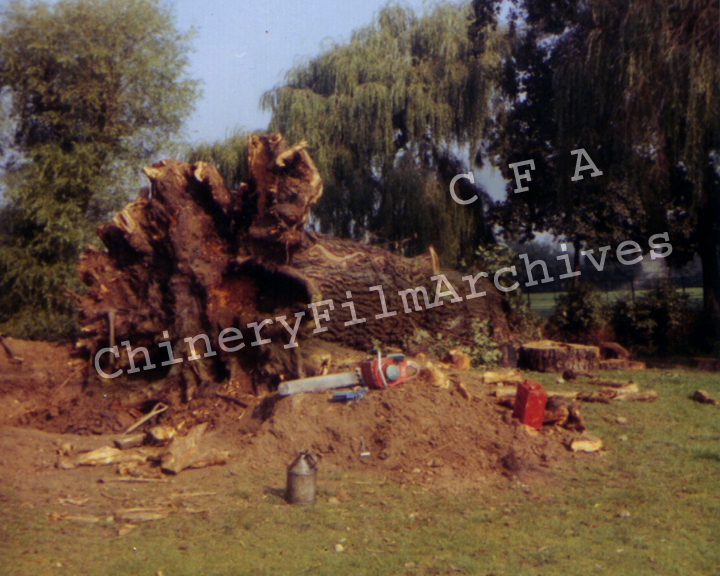 TREE GANG PR 11
